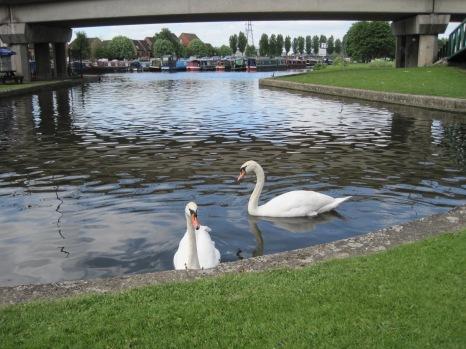 Friendly swans. Sorry guys- no toast!