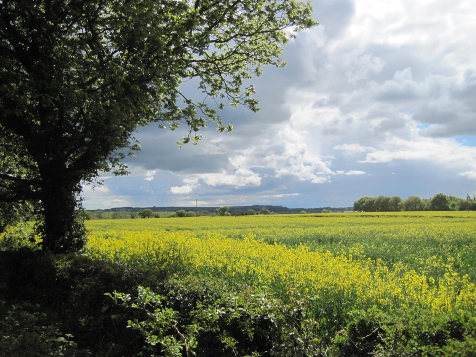 The approach is through peaceful countryside, covered in rapeseed early in the season