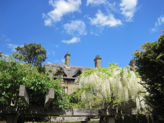 And look at the wisteria!