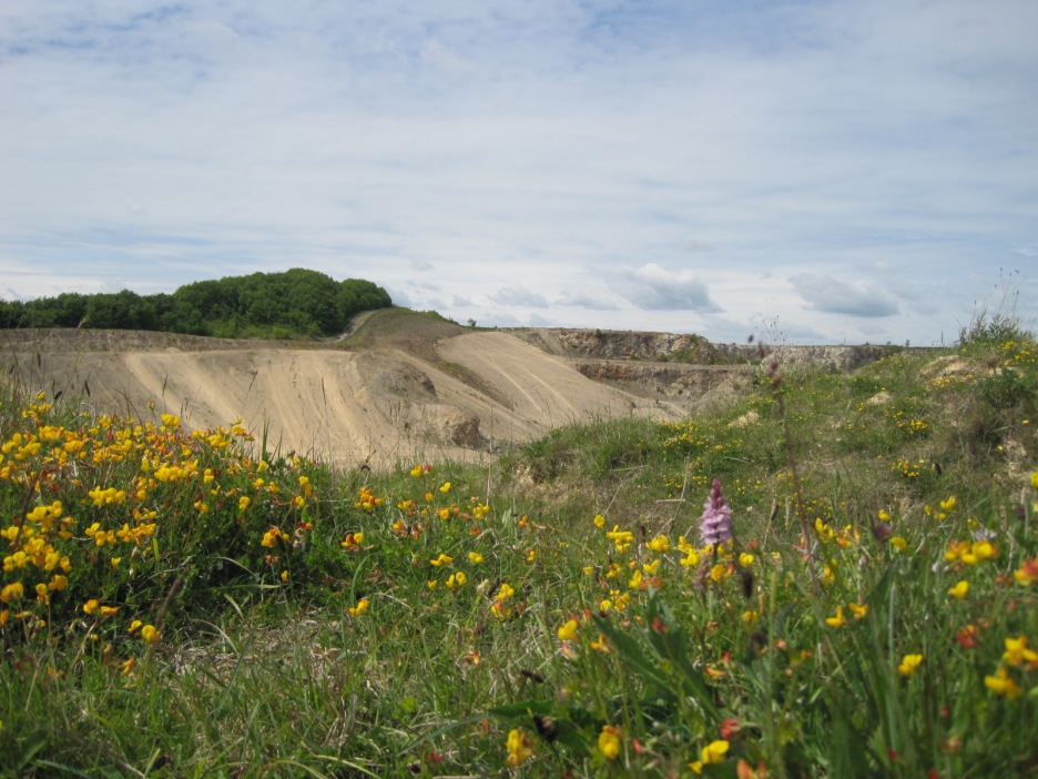 Blending with the golden trefoil around the quarry
