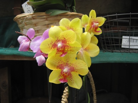 And even an orchid or two