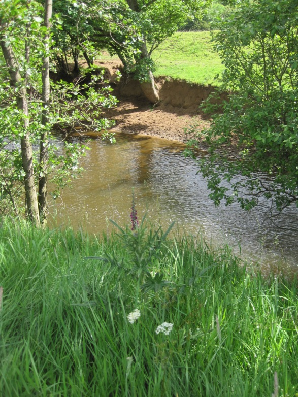 The river idles below us