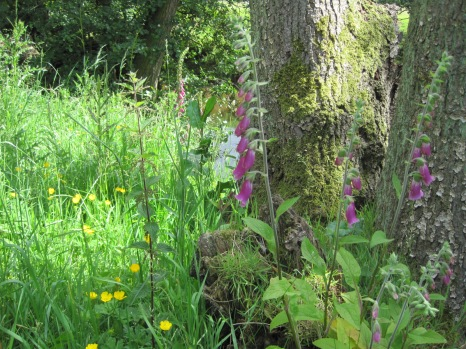 With a wealth of wild flowers
