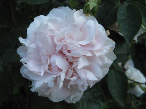 One last bloom!