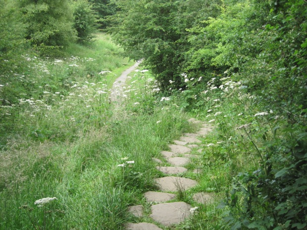 Let's follow the path down into the woods