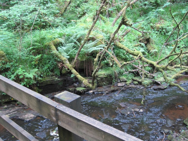Tangling with ferns and water