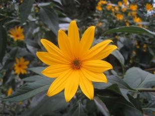 Yellowness!