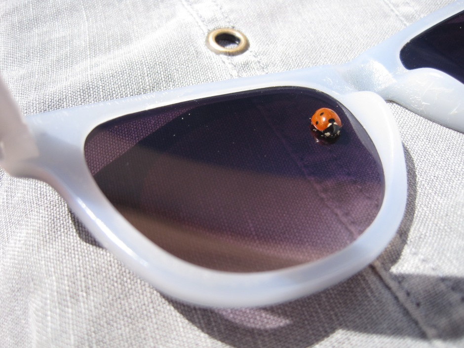 Or a ladybird sitting on my sunglasses