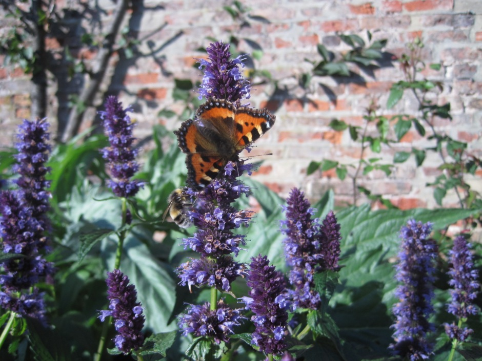 And a South Border to attract the butterflies