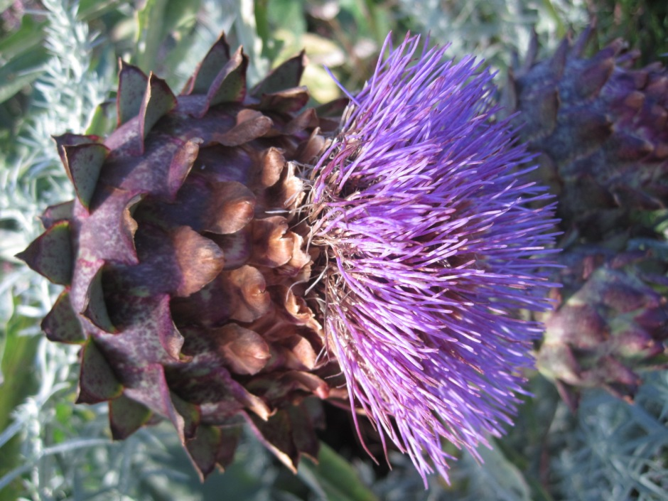 And thistle delight!