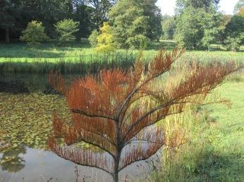 A wisp of pine
