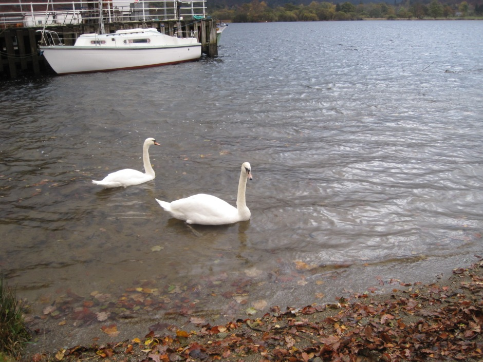 And two wonderfully curious swans