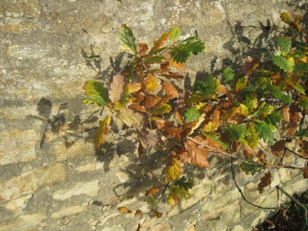 Leaves against an old stone wall