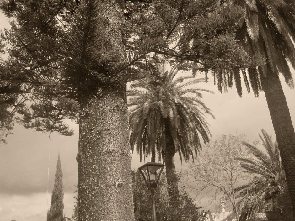 Loule park