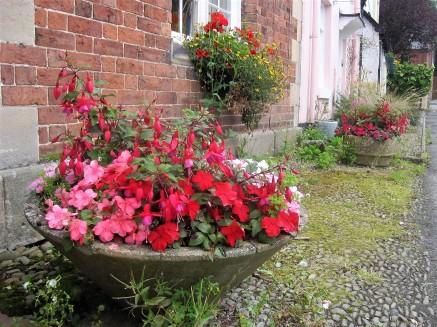 Luscious planter