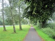 White poplar trees line the leafy path