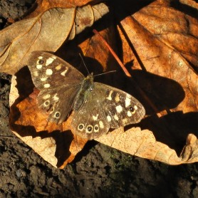 A moth alights on curling brown