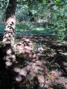 Leaf shadows gently caressing a tree