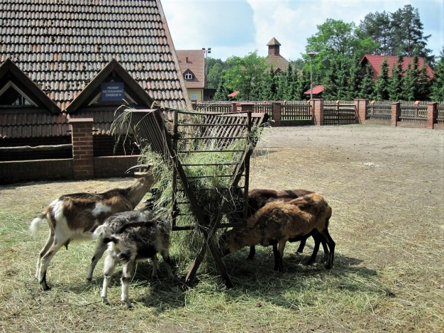 The animal pens at the nearby park