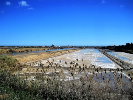 Raw nature in the salt pans
