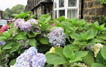 But we did find some bedraggled hydrangea